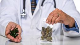 doctor_with_cannabis