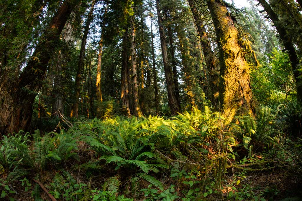 Biodiversity Helps Ecosystems Survive Climate Change