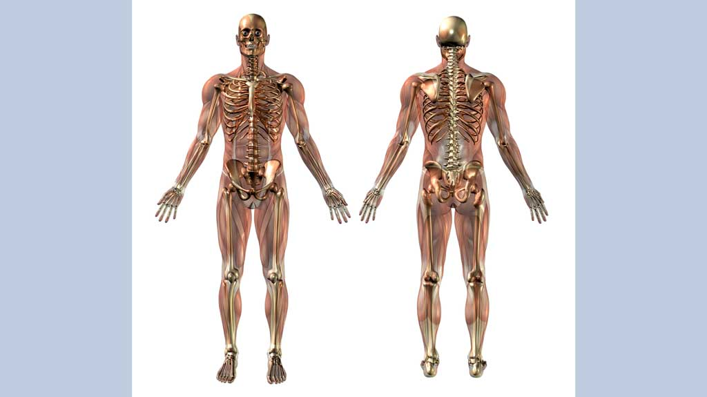 How well do you know your basic anatomy? – Voxitatis Blog